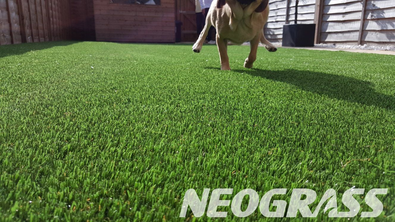 Artificial Grass for Dogs - Everything You Need to Know