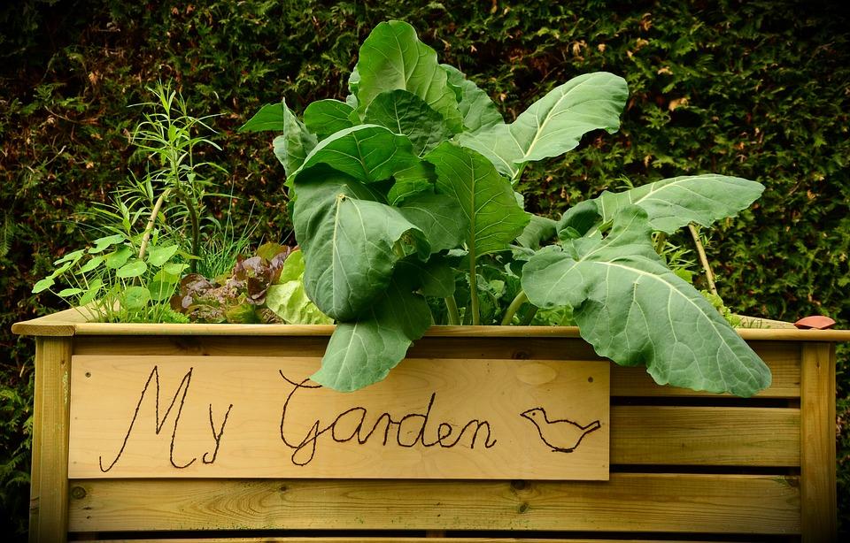 How to Create an Edible Garden