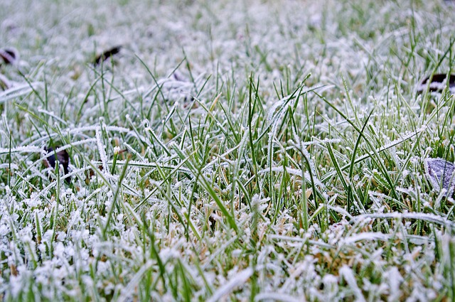 Will Frost or Snow Damage Artificial Grass?