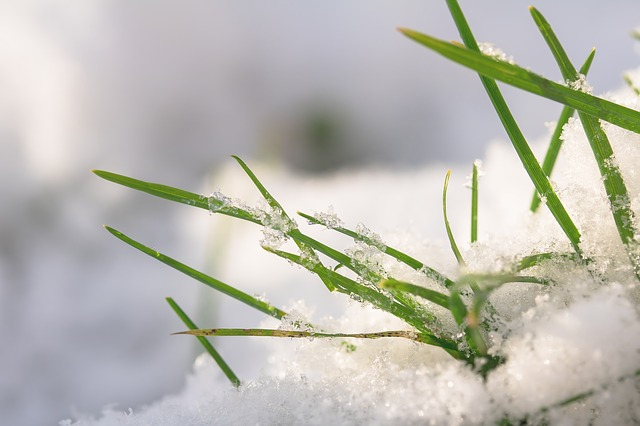 snow on artificial grass