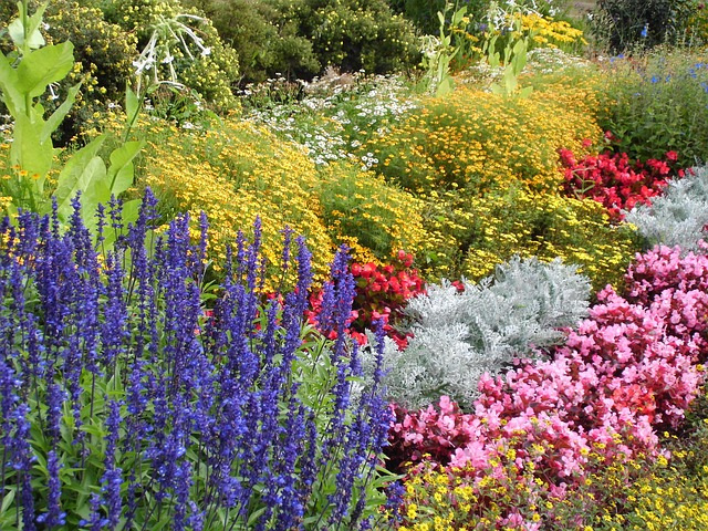 6 June Garden Maintenance Tasks