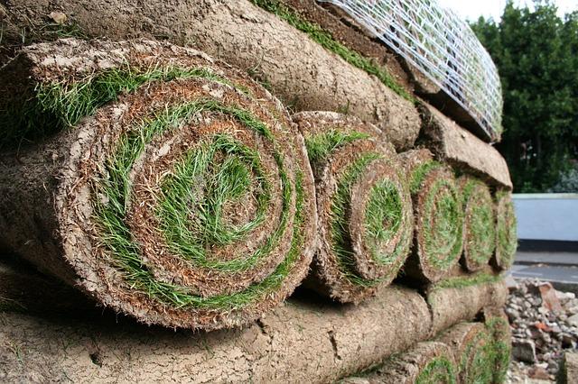Artificial Grass vs Real Grass: A Price Comparison