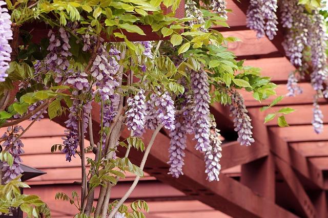 garden pergola