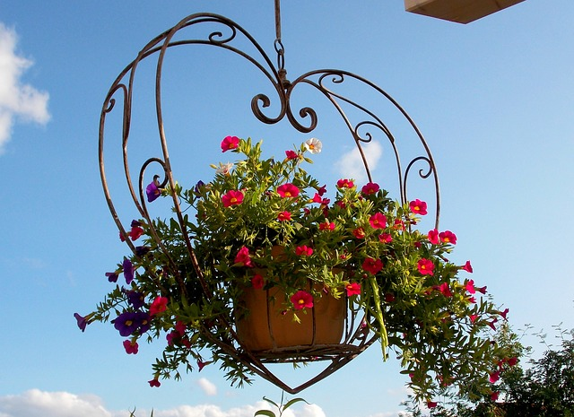 a beautiful hanging basket