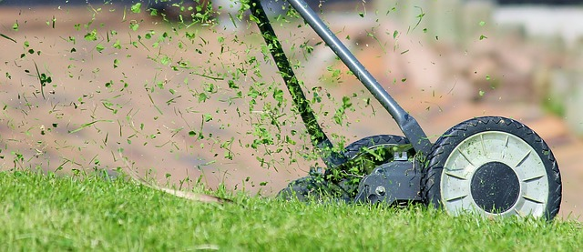 How to Stop Chafer Grub from Destroying Your Lawn