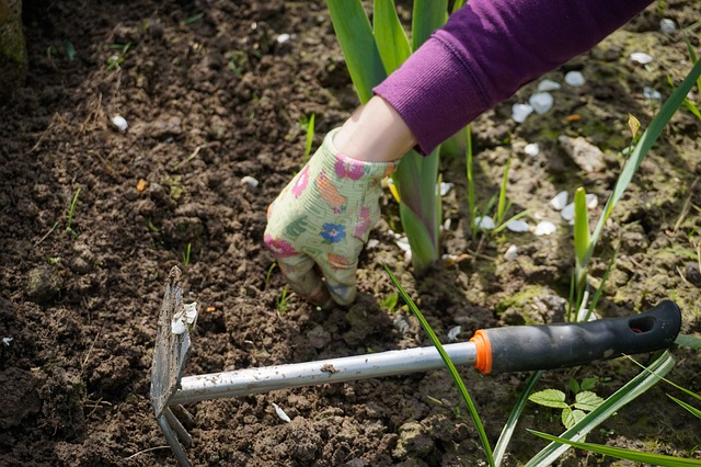 How to Prepare Your Garden for Drought