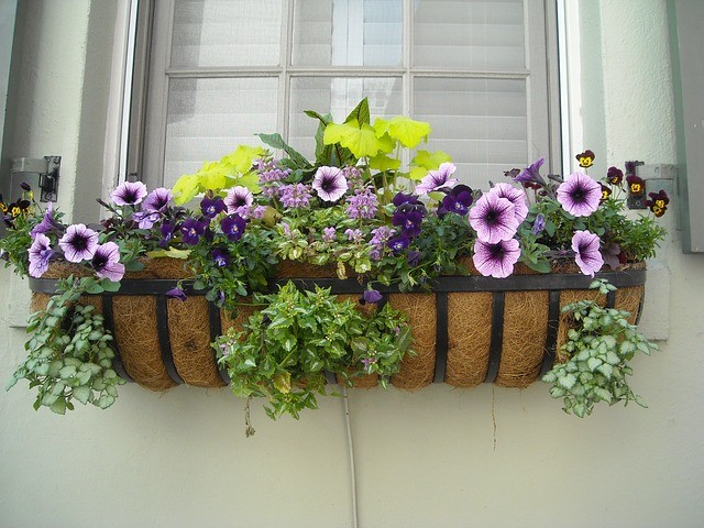 kitchen window planter