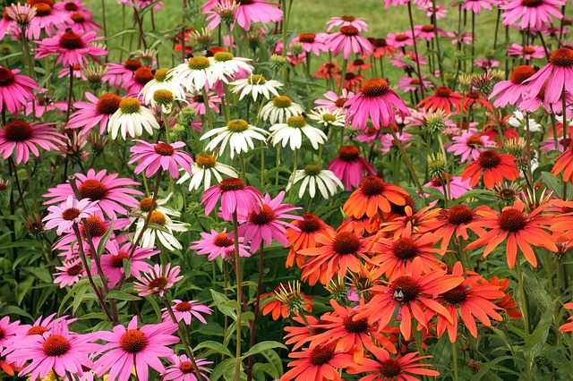 Top 10 Low-Maintenance Plants for Busy Lifestyles