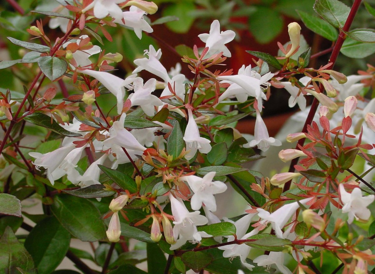 10 Low-Maintenance Shrubs for Your Garden