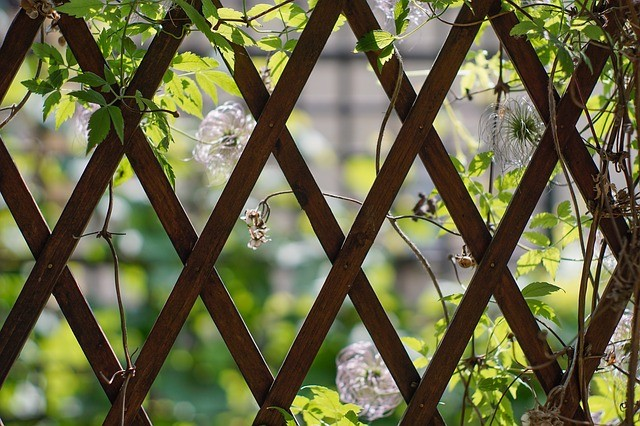 courtyard garden trellis screening