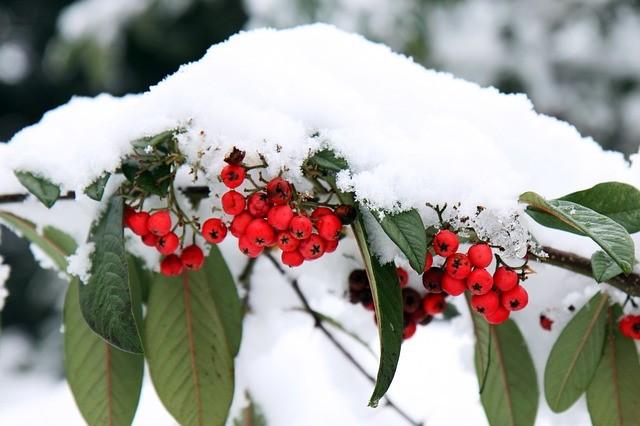 december garden maintenance