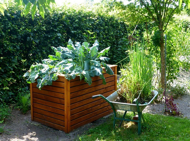 garden raised bed