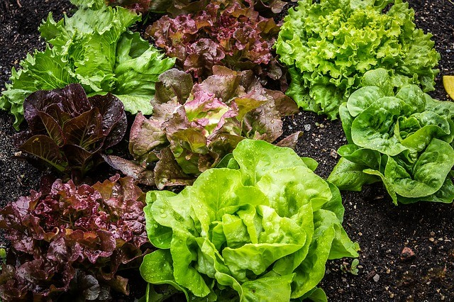 10 Best Vegetables to Start Growing in Your Garden