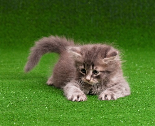 fake grass for cats