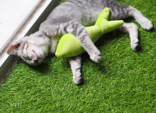indoor cat on fake grass
