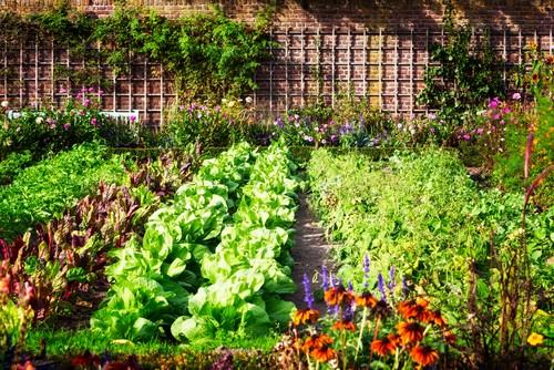 edible vegetable garden